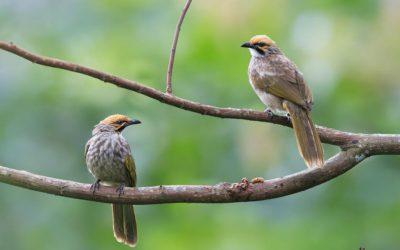 istana penangkaran burung, imogiri, kebun buah mangunan, hutan pinus imogiri, paket wisata jogja75,